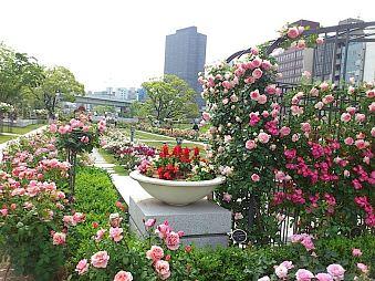 大阪-中之島玫瑰園-2