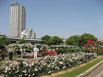大阪-中之島玫瑰園