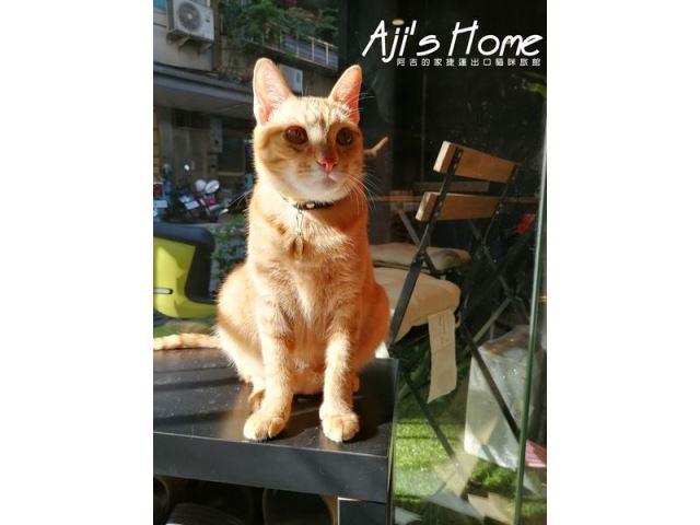 優質貓咪旅館推薦